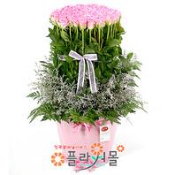 [당일배송][100송이]신데렐라(핑크백송이장미)♡ 대형꽃바구니 생일 기념일 꽃선물_꽃배달당일배송_명품 전국꽃배달_[플라워몰]