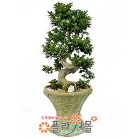 가지마루(웰빙식물)